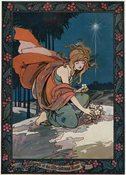 The Legend of the Christmas Rose - this poor girl had no gift for the infant Jesus, so a kindly angel showed her this flower which she forthwith picked and gave him