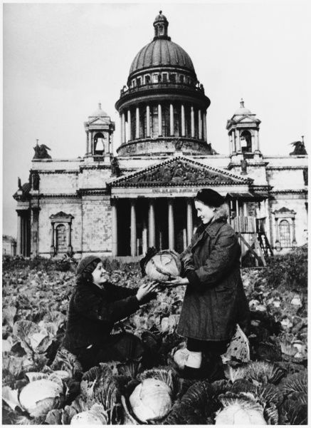 Picking cabbages from the vegetable patches in front of St Isaac's Cathedral