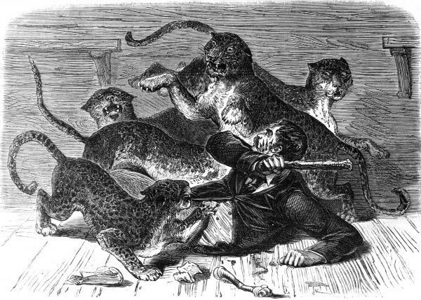 An alarming occurance at a menagerie-a keeper attacked by five leopards. Date: 1870