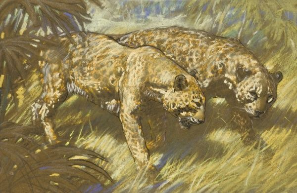Leopards prowling through the African bush. Pastel drawing by Raymond Sheppard