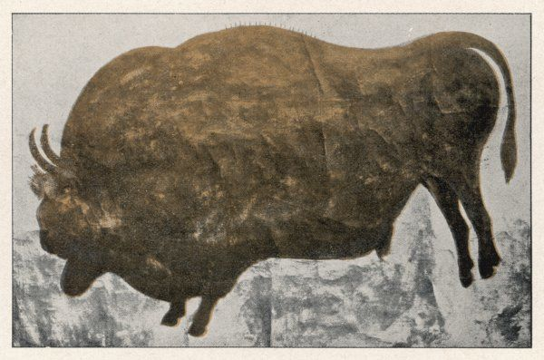 Painting of a bison in a palaeolithic cave (2 of 2)