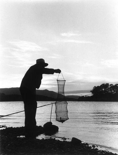Checking how many fish are in the keepnet at the end of a days angling Date: 1950s