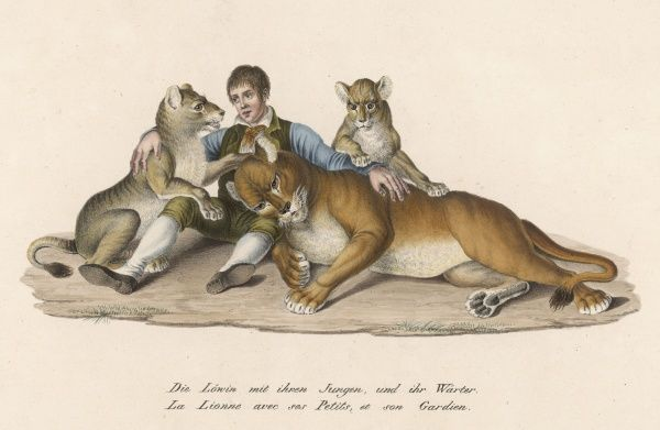 American trainer Isaac van Amburgh, with lioness and cubs