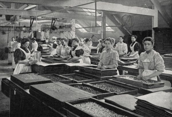 Women at work in the Liquorice room at the sweet manufacturers Clarke, Nickolls and Coombs, at Hackney Wick, London. The firm also made 'Clarincos' chocolates