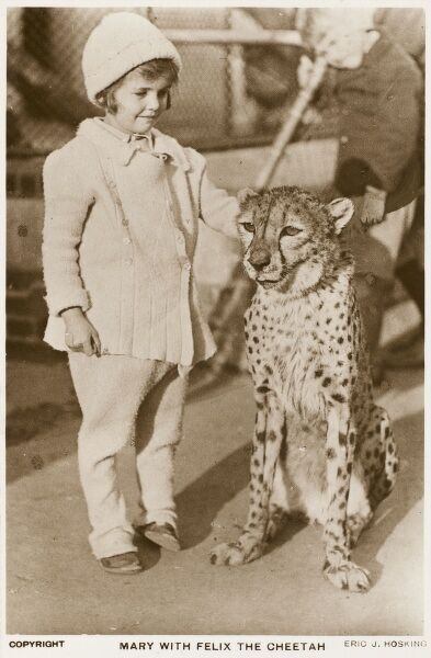 'Mary' with Felix the Cheetah