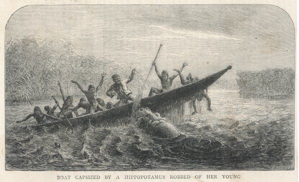 His boat is rammed by a hippopotamus, displeased because its young have been shot by the expedition