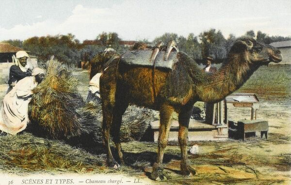Loading up a camel - Algeria. There is a set of scales (and administration desk) in the background to make sure the weight of the goods is correctly recorded prior to departure