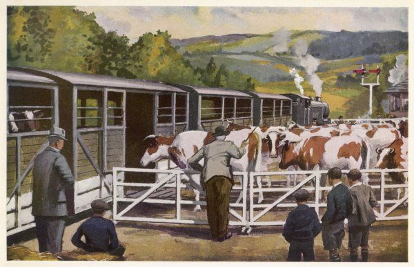 Loading cattle onto a train at a country station