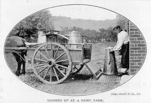 Loading milk churns onto a horse-drawn milk cart at a dairy farm : the cart will go from house to house, filling cans or jugs from the churns