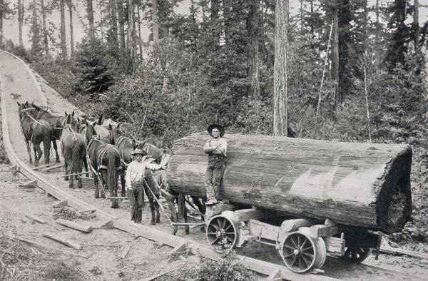 Horses are used to pull large tree trunks on railway carriages in California, U.S.A