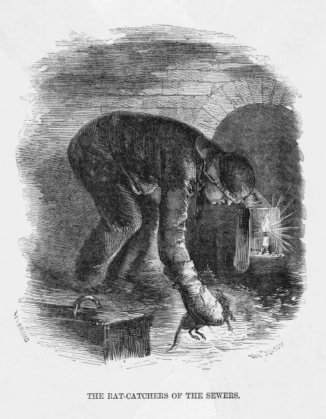 A rat-catcher at work in the London sewers