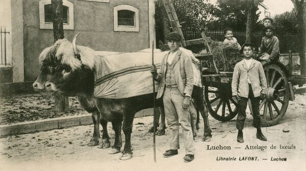 Luchon, Pyrenees - southern France (famed for its thermal springs). Farmer with his ox-drawn cart and children