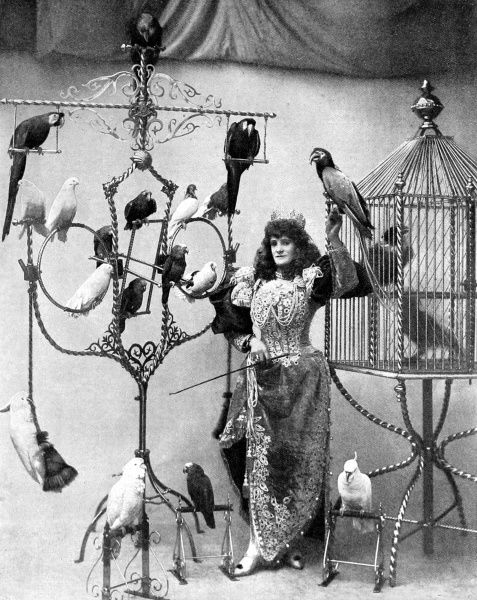 Photograph of Madame Marzella, the music hall star, with her collection of birds, at the Tivoli, 1896