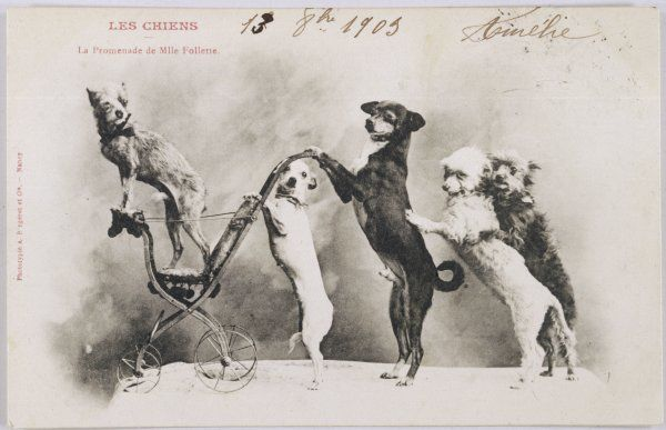 'La Promenade de Mademoiselle Follette' - four dogs take a fifth for a ride in a pram- like vehicle