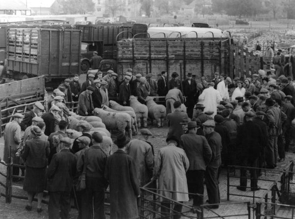 Farmers in the Sales Ring of a sheep market at Maidstone, Kent, England. Date: 1950s
