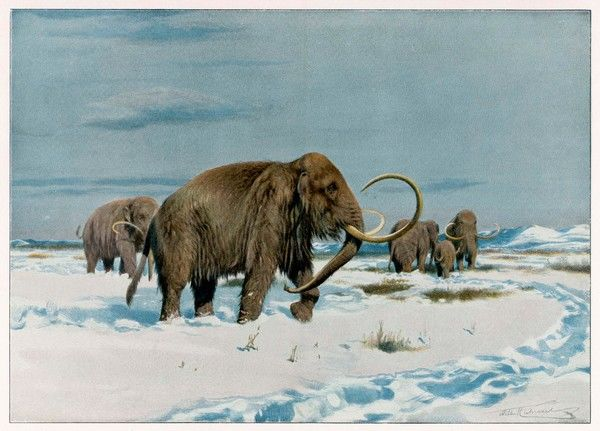 A mammoth herd during the Ice Age