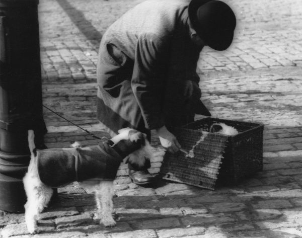 A man in an overcoat and bowler hat leans over a wickerwork basket containing a dog or puppy. Another dog, wearing a coat, stands tethered to a post by its lead