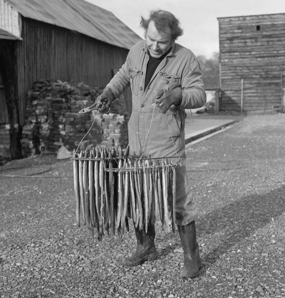 A man in overalls holding two racks containing fish, ready for smoking in a barn