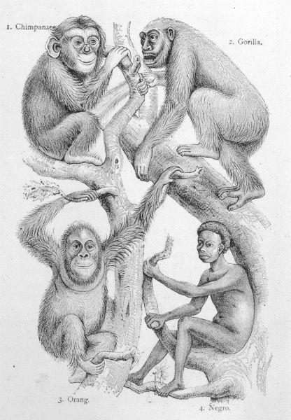 MAN WITH OTHER PRIMATES