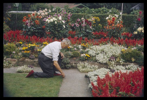 A man crouches in his colourful garden, tending to the border of his lawn