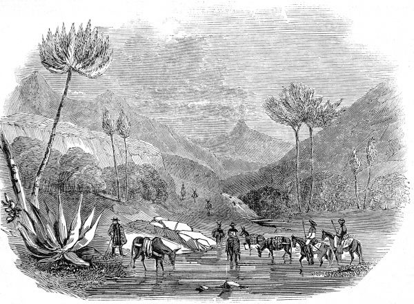 Engraving showing the valley beside Man's Hand Mountain, Mexico, with Mexican aloe or maguey trees, 1846