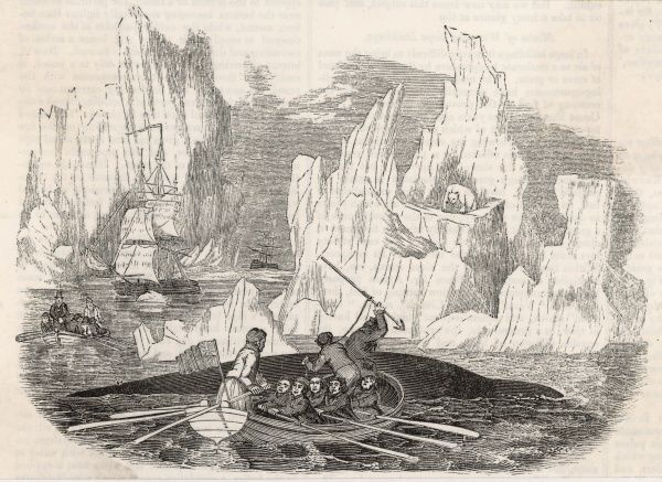 Whaling in the Arctic
