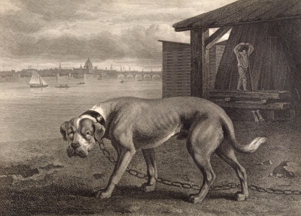 A formidable-looking mastiff on a long chain guards a carpenter's works on the south bank of the Thames