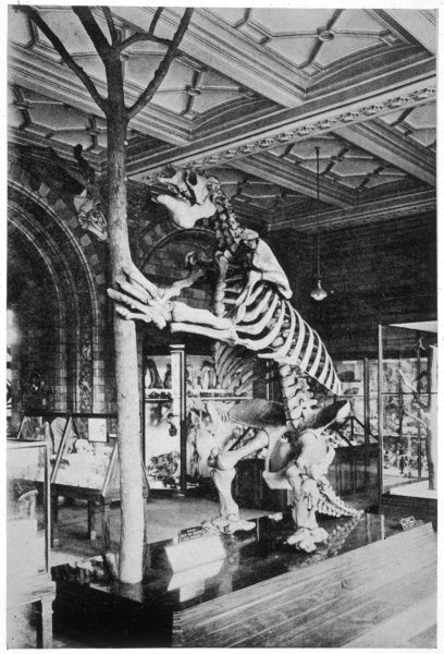 The Megatherium was a gigantic ground sloth of the Ice Age, eighteen feet in height