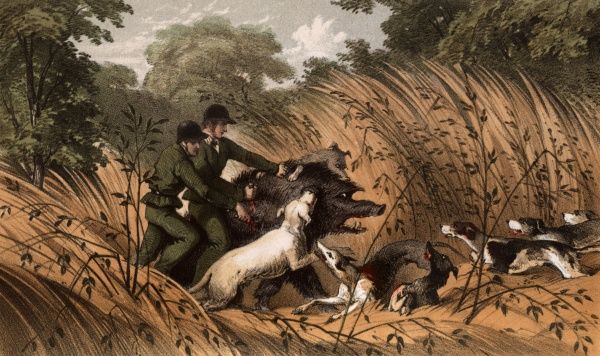 A Melee -- men and hounds on a wild boar hunt in Ceylon (Sri Lanka). 1854