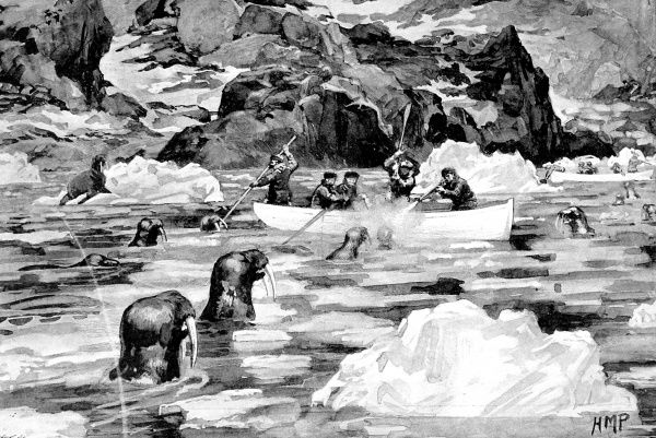 Illustration showing the crew of the Jackson-Harmsworth Polar Expedition, in their boats shooting walrus, near Franz Josef Land, 1896. The Jackson-Harmsworth Expedition went to Franz Josef Land with the intention of making an attempt to reach the North Pole