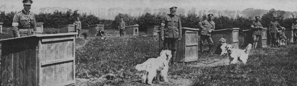 Messenger dogs billeted behind the front line trenches, soldiers stood by kennels with their dogs Date: 20th century