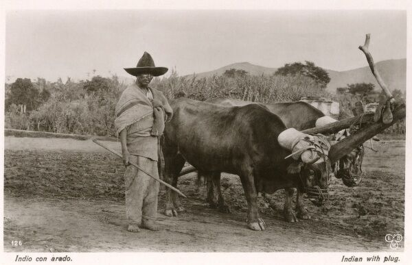 Mexican farmer with his ox-pulled plough
