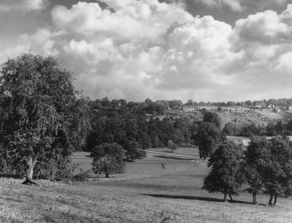 A glorious vista in Mickleham Park, a favourite beauty spot, between Leatherhead and Dorking, Surrey, England. Date: 1930s
