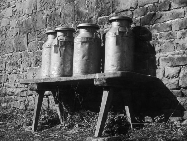 A study of milk churns, awaiting collection at a farm at Barnston, The Wirral, Cheshire, England