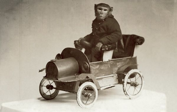 A rather surreal photograph of a monkey driving a model vintage car