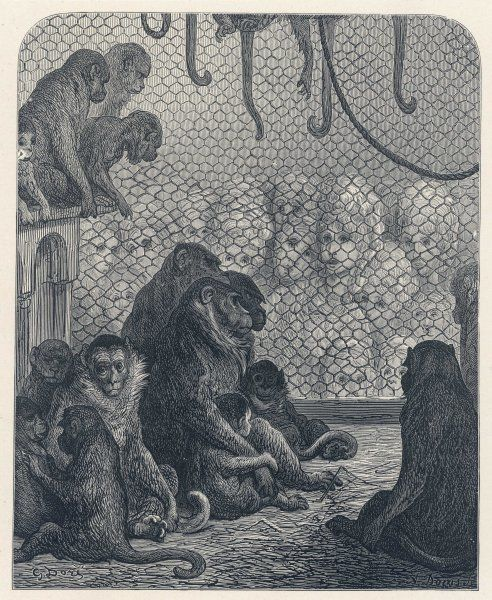 A forlorn group of monkeys gaze out of their cage, as a large gathering of women stare fixedly at them - one of Dore's most striking comments on London society