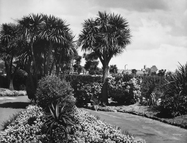 Tropical trees and plants in the lovely Morrab Gardens, Penzance, Cornwall, England