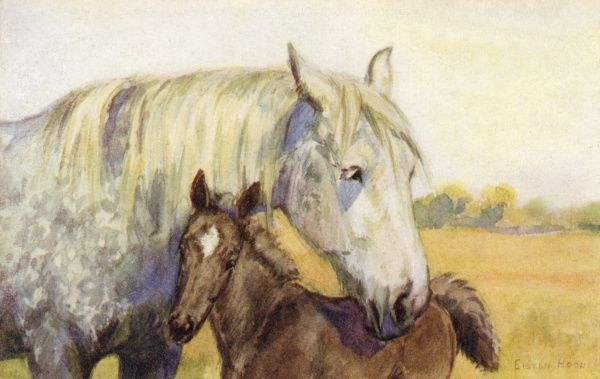 Mother and foal. Artist: Eileen Hood. Watercolour image of female horse with its foal Date: circa 1922