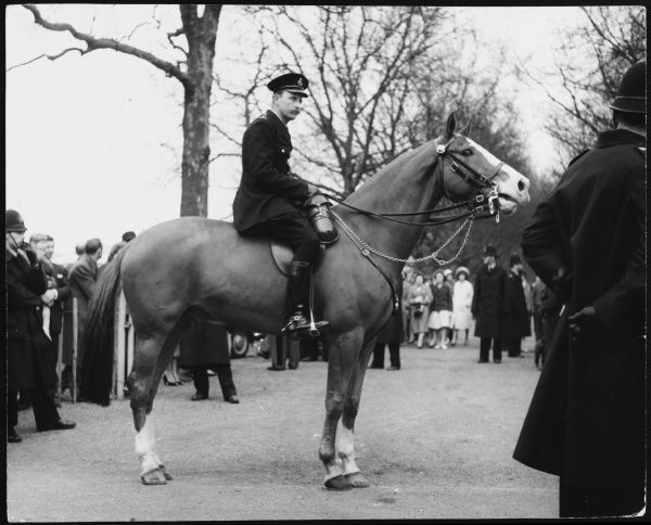 A mounted policeman on his horse, controlling the crowds with other policemen on foot, probably in a central London park perhaps Hyde Park