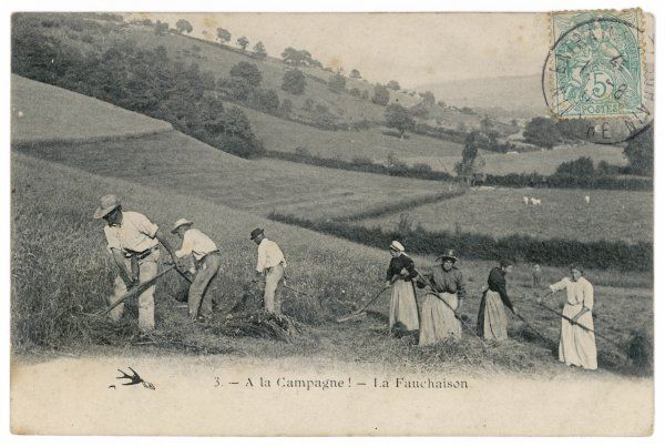 'La Fauchaison' - Mowing in a French hay field
