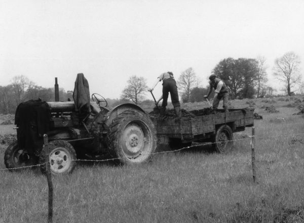 Spreading muck on a field in Essex Date: April 1957