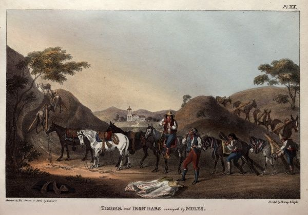 Timber and iron bars conveyed by mules in Chile, South America.  1824