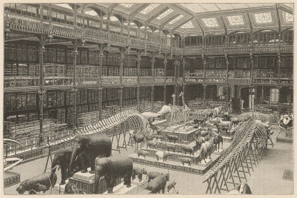 Whales and elephants dominate the crowded hall of the Musee d'histoire naturelle, Paris