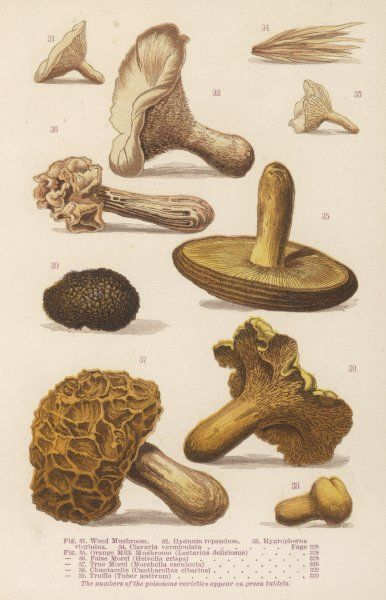 Varieties of mushroom: all of these are edible