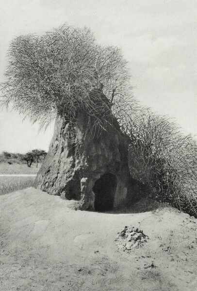 Namibia (formerly 'German South West Africa') - A Termite Mound