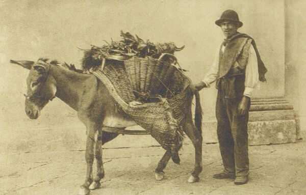 Naples, Italy - Herb Seller with his lovely donkey Date: circa 1910s