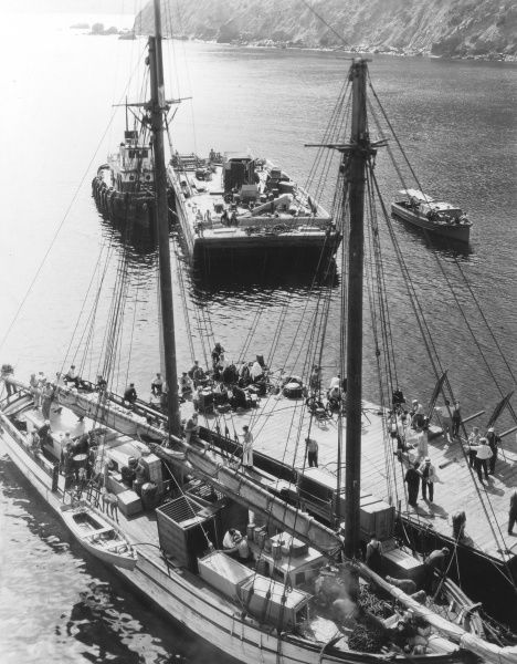 A floating menagerie and strange crew, docked at Catalina, Canada, whilst filming a movie. Date: 1930s