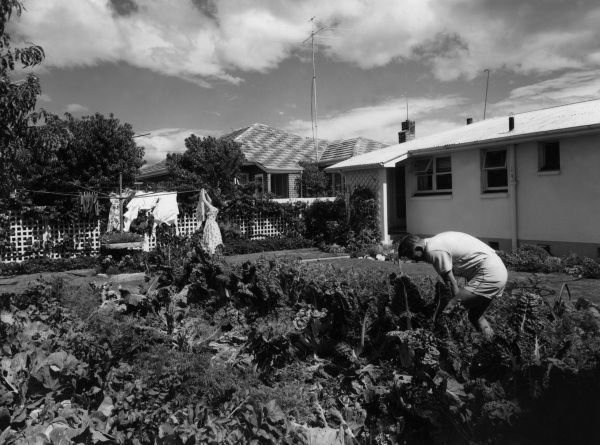 This back garden vegetable patch is typical of many at the rear of the average New Zealand home. Date: 1950s