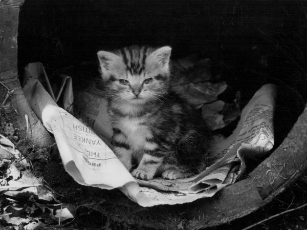 A clever little kitten discovers that a crumpled old newspaper in a barrel makes a comfortable bed! Date: 1960s