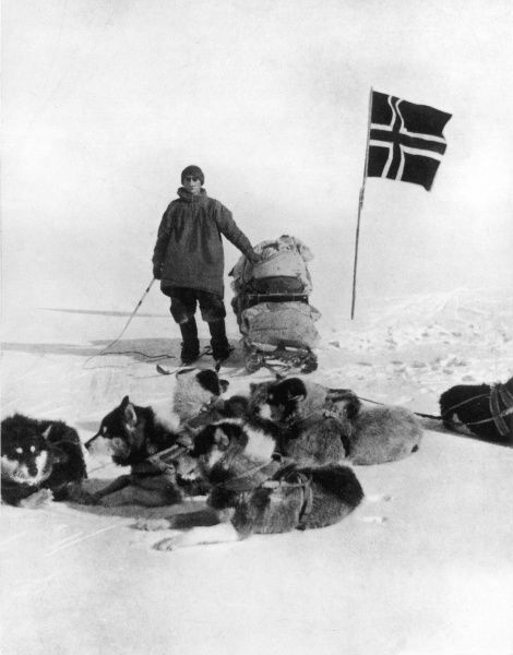 Photograph showing Lt. Helmer Hansen, of the Amundsen Antarctic Expedition of 1910-12, standing with his sledge, dog team and Norwegian flag at the South Pole, December 1911
